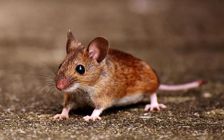 属鼠2020容易离婚吗 会因为什么离婚