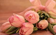 520情人节送什么花合适 女朋友最喜欢的花推荐