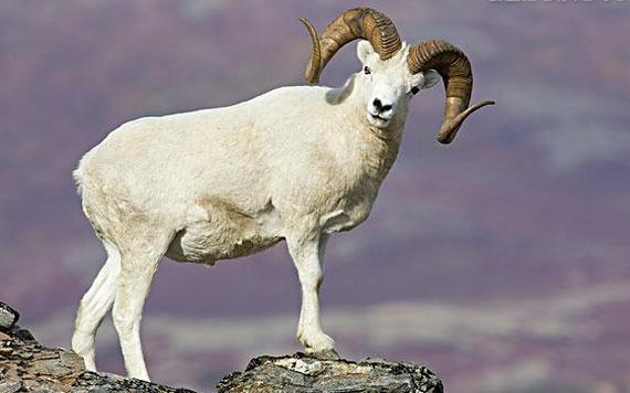 属羊男和属狗女的婚姻怎么样