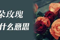 3朵玫瑰代表什么意思