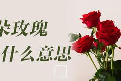 4朵玫瑰代表什么意思