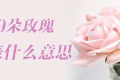 29朵玫瑰代表什么意思