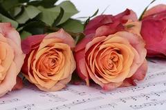13朵玫瑰花语是什么