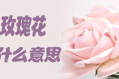 8朵玫瑰代表什么意思