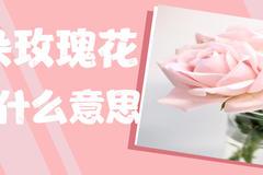 11朵玫瑰花代表什么意思