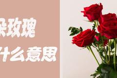20朵玫瑰代表什么意思