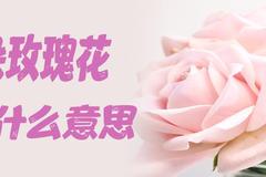 七朵玫瑰花代表什么意思