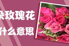 27朵玫瑰花代表什么意思