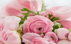 26朵玫瑰代表什么意思