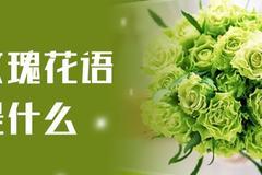 绿玫瑰花语是什么