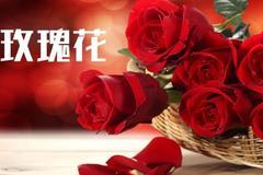 红色玫瑰花语