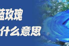 蓝玫瑰代表什么意思