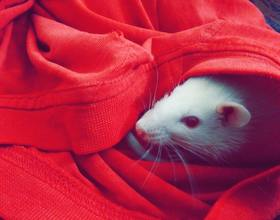 属鼠本命年可以结婚吗 本命年结婚的讲究