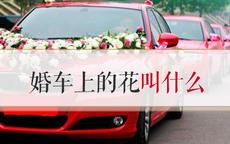 婚车上的花叫什么