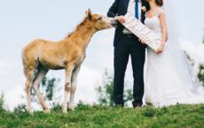 如何祝福别人结婚