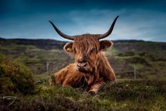 属牛的跟什么犯冲 和属牛结婚相冲克的生肖