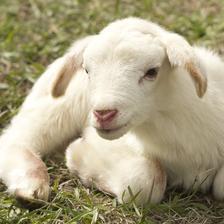 羊与什么生肖相合