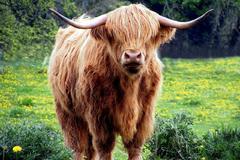 2009年属牛是什么命