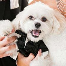 婚礼创意设计 15个最火婚礼创意点子推荐