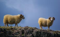 羊和什么属相相冲相克