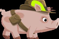 属相猪和什么属相相克 生肖猪和什么生肖相冲