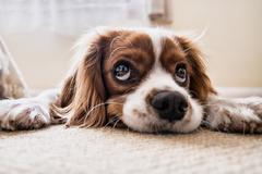 82年属狗的是什么命