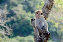 属猴三合和三冲属相是哪些